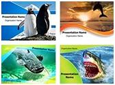 Water Animals PowerPoint Templates Bundle, TheTemplateWizard