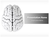 Brain Free PowerPoint Template, TheTemplateWizard