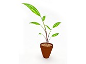 Growing Plant Clipart Image, TheTemplateWizard