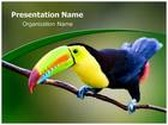 Keel Billed Toucan Template Combo Offer PPT 6 Slides and Word 3 Pages, thetemplatewizard