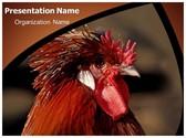 Rooster PowerPoint Template, TheTemplateWizard