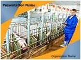 Veterinarian Pig Farm PowerPoint Template, TheTemplateWizard