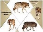 Wildlife Wolf PowerPoint Template, TheTemplateWizard