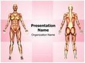Women Muscular Anatomy Template Combo Offer PPT 6 Slides and Word 3 Pages, thetemplatewizard