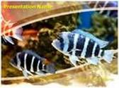 Zebra Fish PowerPoint Template, TheTemplateWizard